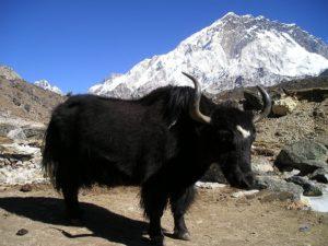 nepal-419_960_720