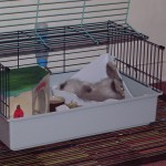 Les lapins sont souvent TRES détendus